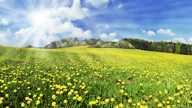 Wellspect About Sunny, flowery meadow